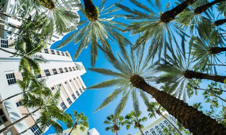 South Florida Ranks in Multiple Top 10 Lists